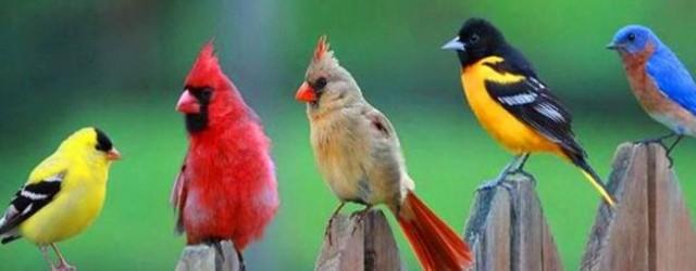 birds c